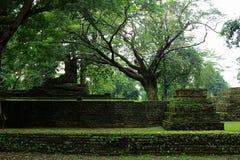 Vieux arbres dans historique Photographie stock