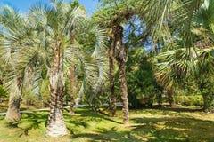 Vieux arbres et pelouses vertes en parc subtropical Photo libre de droits