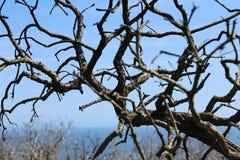 Vieux arbres, scène de nature, fond Images stock