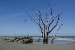 Vieux arbres sur la plage photos stock