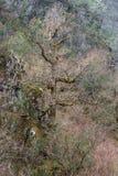 Vieux arbres sur une falaise Photographie stock