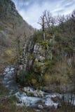 Vieux arbres sur une falaise par la rivière Images stock