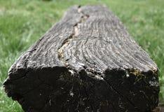Vieux banc en bois putréfié dans un pré Photographie stock libre de droits