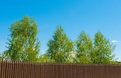 Vieux barrière et bouleau en bois sur un fond bluesky, paysage russe Images stock