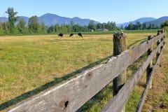 Vieux barrière et pâturage en bois ruraux Photographie stock libre de droits