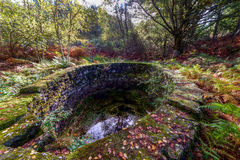 Vieux bien dans la forêt Photo libre de droits