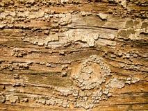 Vieux bois photos libres de droits