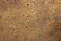 Vieux bois affecté avec le ver de bois Photos libres de droits