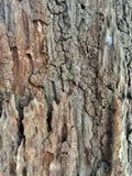 Vieux bois, arbre mort Photo stock
