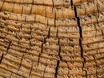 Vieux bois criqué Photo libre de droits