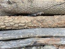 Vieux bois de construction Image libre de droits