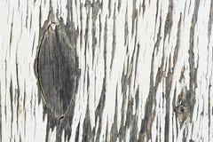 Vieux bois de décomposition Image stock