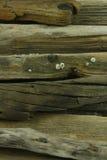 Vieux bois de mer Images libres de droits