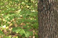 Vieux bois de texture dans les avants avec le fond vert Image stock