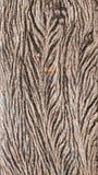 Vieux bois de texture la même feuille Images libres de droits