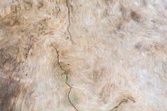 Vieux bois et modèles en bois, arbre image stock