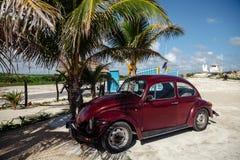 Vieux Bourgogne volkswagnen le scarabée garé sous un palmier Le Mexique, Cancun, Cozumel, image stock
