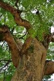 Vieux brach et tronc d'arbre Photos stock