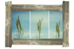 Vieux cadre en bois de photo - usines de maïs image libre de droits