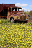Vieux camion abandonné d'Austin dans l'Australie occidentale photos libres de droits