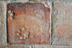 Vieux carrelage de terre cuite avec une empreinte des pattes du chien Photographie stock