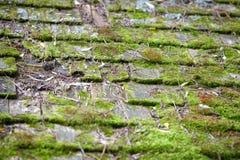 Vieux Cedar Roof Shingles Covered dans la mousse Photographie stock