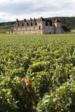 Vieux château français Bourgogne, France, élevage de vignoble de raisins, vertical Images libres de droits