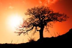 Vieux chêne dans le coucher du soleil photographie stock