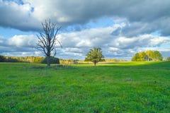Vieux chêne dans le pré latvia 2011 Image stock