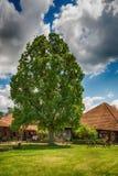 Vieux chêne en Serbie Photos stock