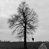 Vieux chêne solitaire d'arbre Photographie stock libre de droits