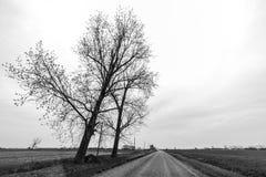 Vieux chêne solitaire d'arbre Photos stock