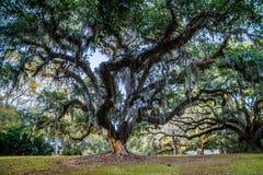 Vieux chênes énormes dans AveryIsland, Louisiane photographie stock