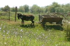 Vieux chariot avec l'âne Photos stock