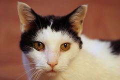 Vieux chat Photos stock