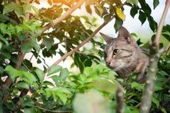 Vieux chat avec l'endroit de nature images libres de droits