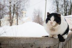 Vieux chat minable sur une barrière en bois Images libres de droits