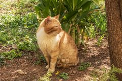 Vieux chat rouge sans abri photographie stock libre de droits