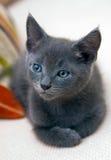 Vieux chaton de six semaines se réveillant d'un somme Images stock