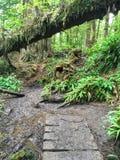Vieux chemin de diminution des effectifs le long de la traînée de côte ouest sur l'île de Vancouver, photo stock