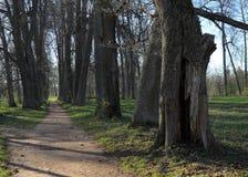 Vieux chemin de parc Photos libres de droits