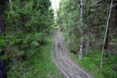 Vieux chemin de terre sale par la forêt Photo libre de droits