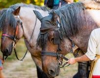 Vieux cheval gris Photo libre de droits