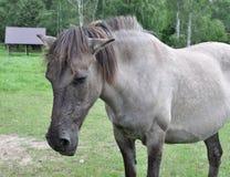 Vieux cheval malade Photo stock