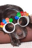 Vieux chien d'anniversaire Photographie stock libre de droits