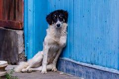 Vieux chien se penchant sur un mur image stock