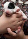 Vieux chiot anglais de chien de berger Images libres de droits