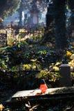 Vieux cimetière évangélique image stock