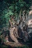 Vieux cimetière juif historique à Wroclaw, Pologne Fond pour la conception et le texte de Halloween photo libre de droits