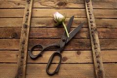 Vieux ciseaux rustiques de vintage sur le fond en bois superficiel par les agents Photographie stock libre de droits